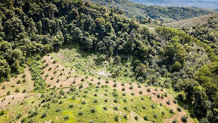 Multinationals gaan door met vernietiging regenwoud