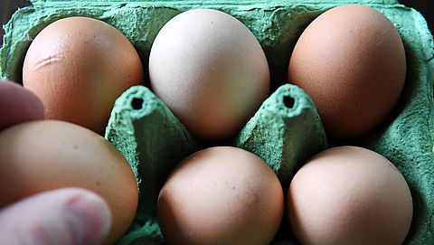 Boete van 30.000 euro voor eierfraude