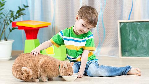 Nat- of droogvoer voor je kat?}