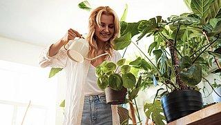 Helaas, planten verbeteren de luchtkwaliteit helemaal niet