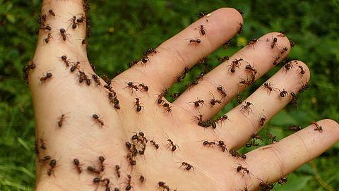 9 tips om mieren te bestrijden}
