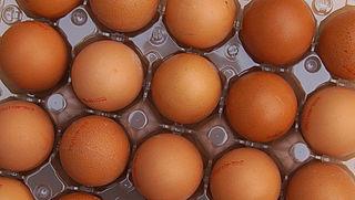 Wederom met fipronil besmette eieren in Tilligte
