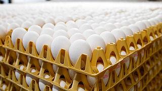 ChickFriend verantwoordelijk gesteld voor met gif besmette eieren