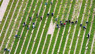 'Toelating pesticiden niet onafhankelijk genoeg'