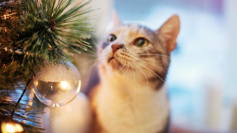 Zo houd je je kat weg bij de kerstboom