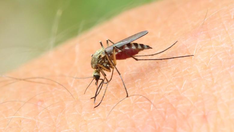 effectief muggen weren uit je huis doe je met dit vierstappenplan