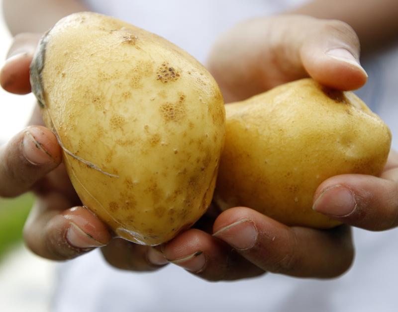 'Bijengif' in aardappelteelt verboden