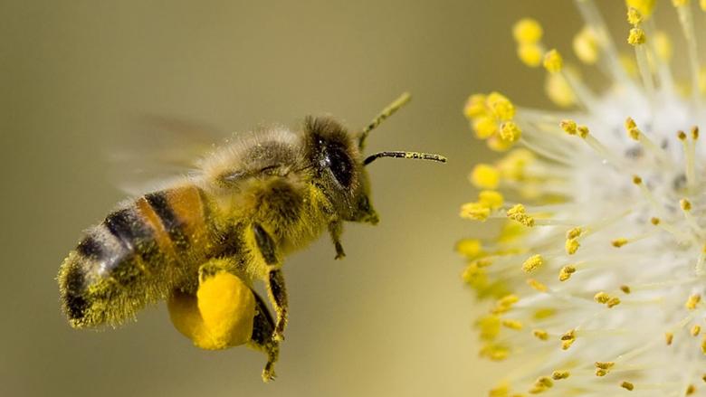 Boeren willen vrijstelling van bijengifverbod