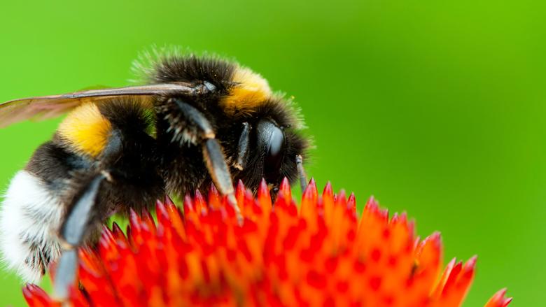 Nederland wil verbod op bijengif in Europa