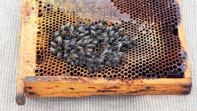 EU-lidstaten stemmen voor verbod op bijengif