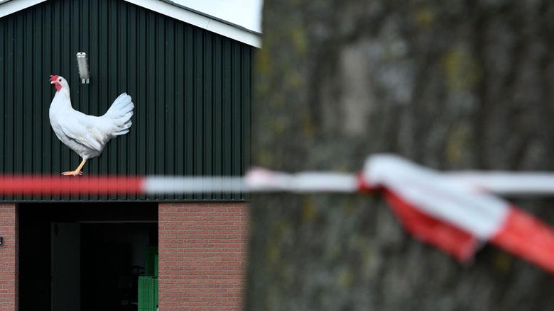 Bestuurders ChickFriend opgepakt in verband met eierschandaal