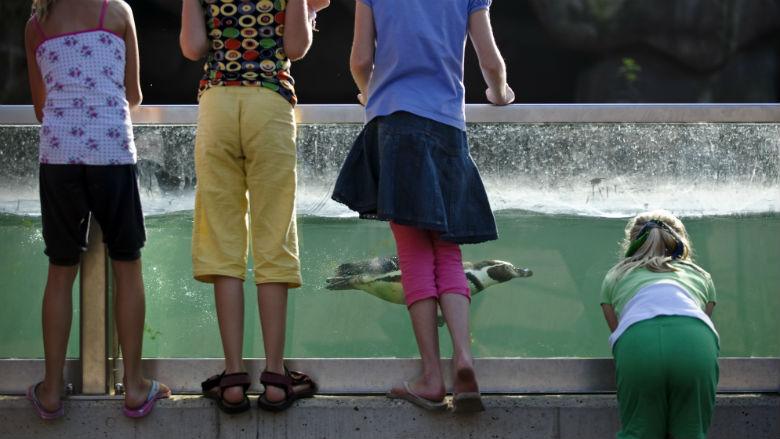'Bezoek aan dierentuin steeds duurder'