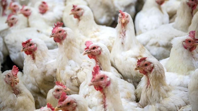 Wakker Dier: 'Stop doorfokken van dieren'