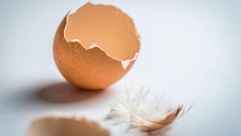 Fipronil-eieren in zeker 15 EU-landen