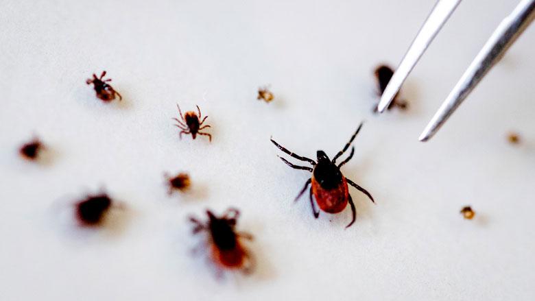 2,5 miljoen euro voor verbetering aanpak en behandeling ziekte van Lyme