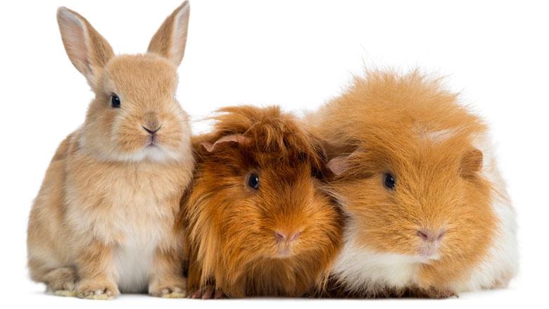Dieren 'leasen' tegen impulsaankoop