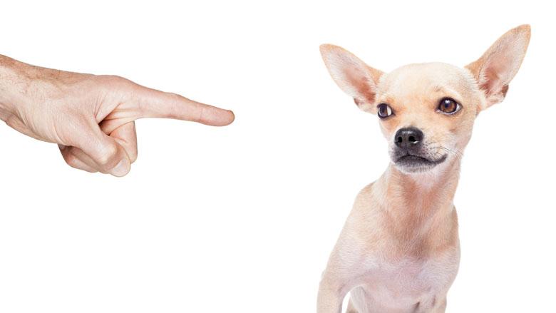 Verbod op dieren houden voor slechte baasjes