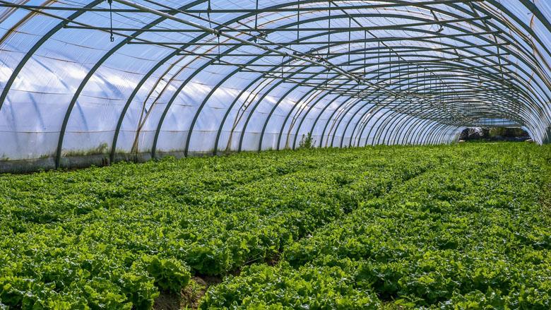 Meer groenten van minder grond door teelt in kassen
