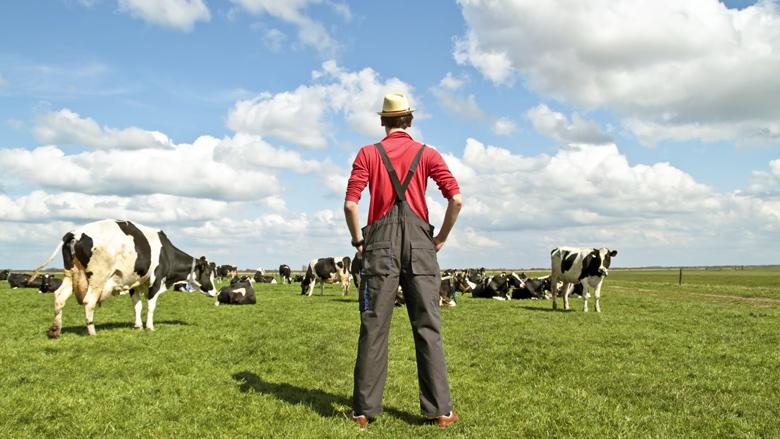 Dumpprijs melk wordt boeren teveel