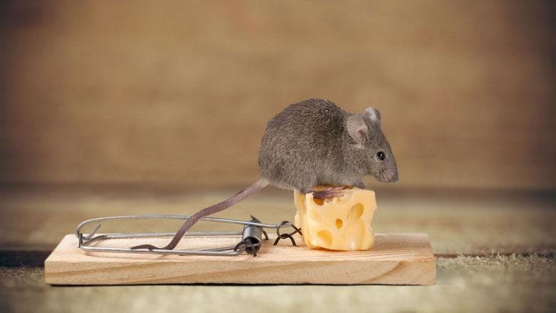 Hoe houd je muizen uit je huis?