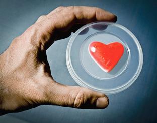 Meer transplantaties bij dood en leven