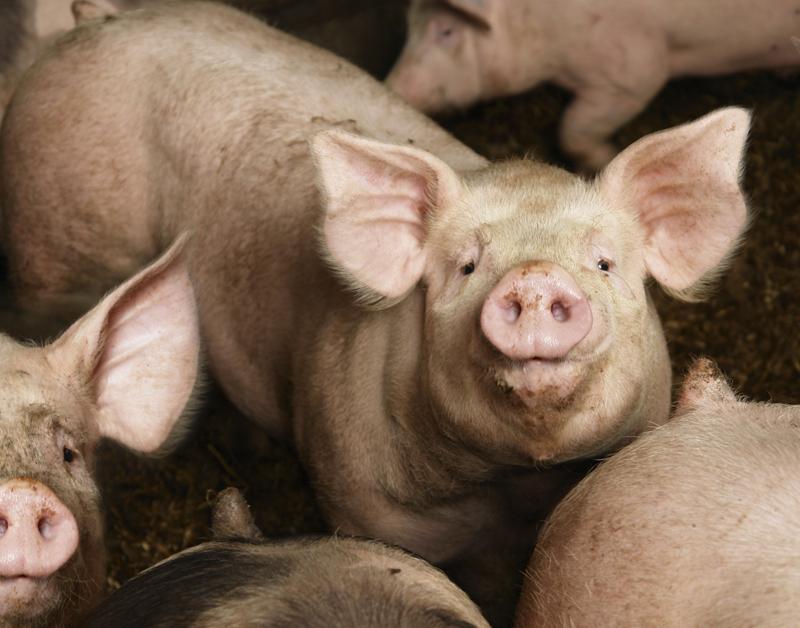 Vleeskeuring weer taak van de overheid