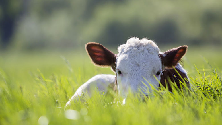 Oververhitte dieren? Meld het online