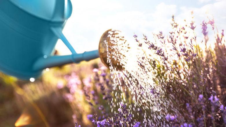 Planten water geven tijdens vakantie, dit moet je weten