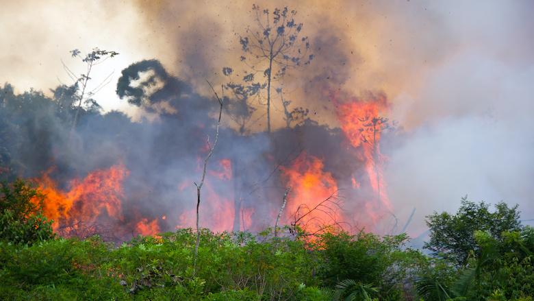 Rabobank, ING en ABP helpen Amazonewoud verwoesten
