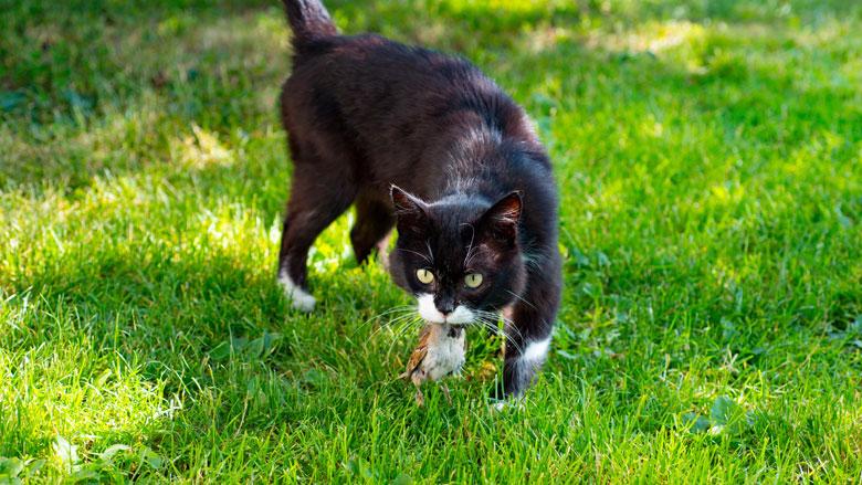 'Kat naar buiten laten is illegaal'