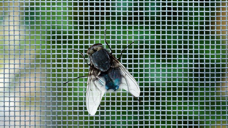 Hoe kan ik vliegen in mijn huis voorkomen en bestrijden?
