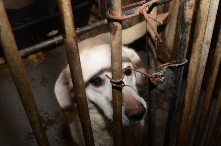 Dierenbescherming haalt honderden honden weg bij broodfokker