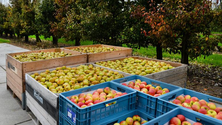Fruittelers slaan handen ineen voor hogere prijzen