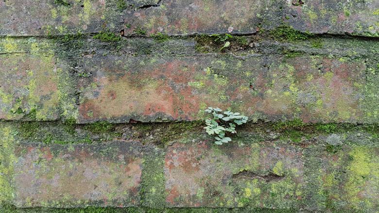 Hoe verwijder je op een milieuvriendelijke manier groene aanslag?