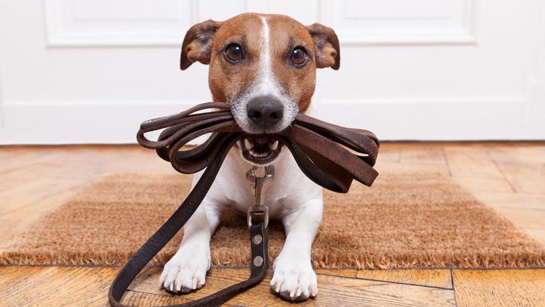Mensen sluiten steeds vaker een huisdierverzekering af