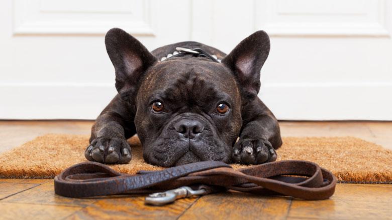 Een hond als huisdier, hoeveel geld en tijd kost dat?