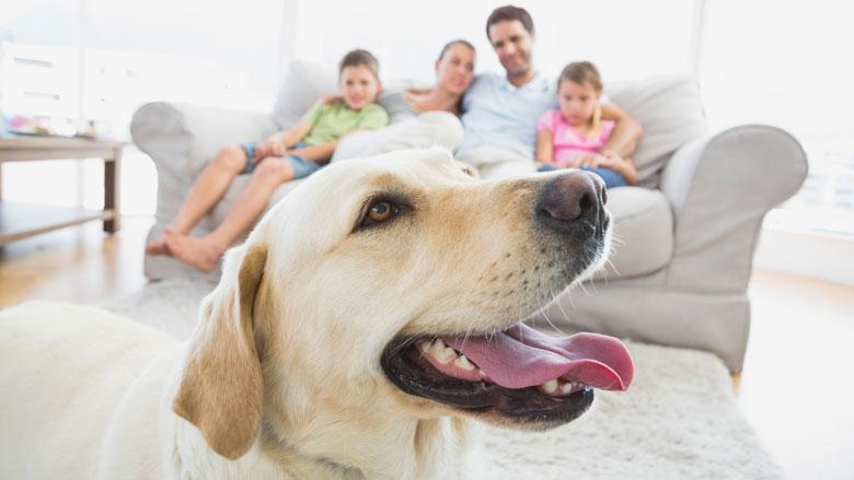 Nederlanders denken steeds beter na over het nemen van een huisdier
