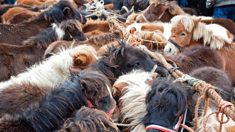 Illegale dierenhandel vanaf nu anoniem te melden