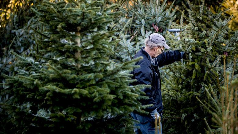Kunst- of echte kerstboom: welke is het meest duurzaam?