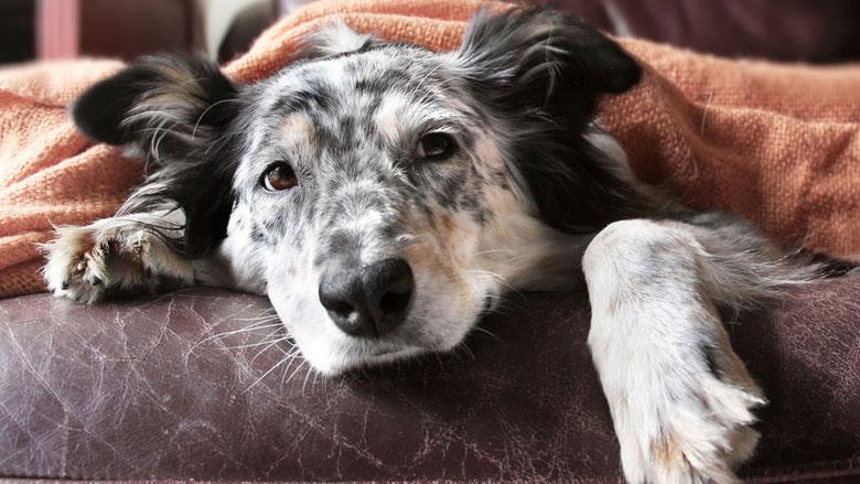 Meer huisdieren vergiftigd door nieuw muizengif