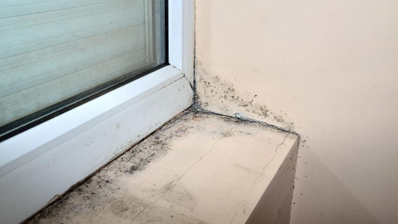 Hoe ongezond is schimmel in huis?