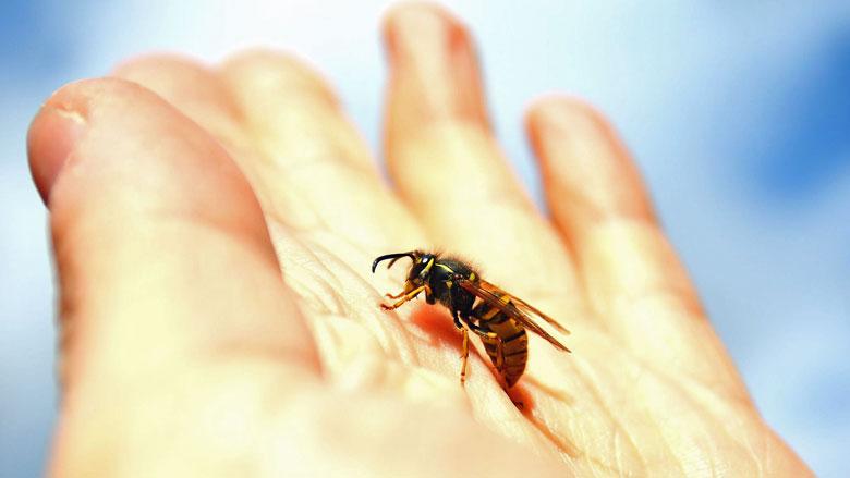 Gestoken door een wesp: dit moet je weten