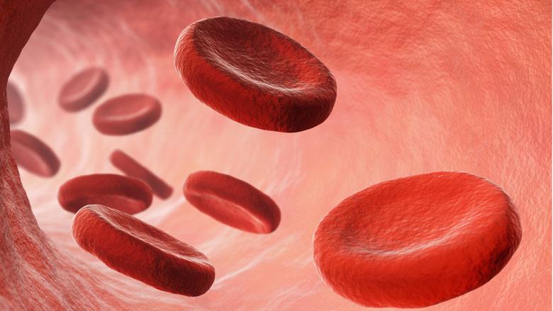 Naar welke bloedgroep is de meeste vraag?
